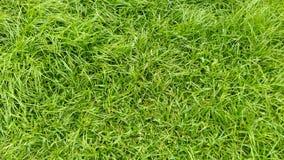 Zielonej trawy pola pełny tło zdjęcia royalty free