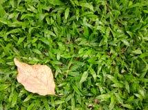 Zielonej trawy pola tło z suchym liściem obrazy royalty free