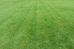 Zielonej trawy pola tło Obrazy Royalty Free
