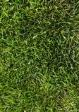 Zielonej trawy pole Zdjęcie Royalty Free