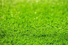 Zielonej trawy pole, naturalny zielony plamy tło i przedpole, zdjęcia stock