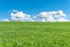 Zielonej trawy pole, niebieskie niebo, biel chmury i drzewo, zdjęcia stock