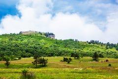 Zielonej trawy pole w niebieskim niebie z chmurami i g?rach fotografia stock
