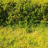 Zielonej trawy pole w parku przy centrum miasta Piękny parkowy scena park z zielonej trawy polem publicznie Naturalna zielonej tr Obraz Royalty Free