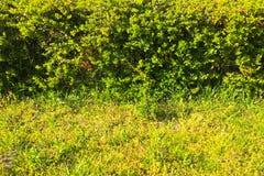 Zielonej trawy pole w parku przy centrum miasta Piękny parkowy scena park z zielonej trawy polem publicznie Naturalna zielonej tr Obrazy Stock