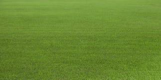 Zielonej trawy pole, zielony gazon Zielona trawa dla pola golfowego, piłka nożna, futbol, sport Zielona murawy trawy tekstura i t Obraz Stock