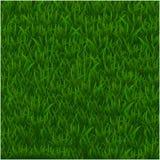 Zielonej trawy realistyczny textured tło odizolowywa białego tło, wektorowa ilustracja Obraz Stock