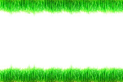 Zielonej trawy rośliny odizolowywać na białym tle Obrazy Stock