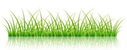 Zielonej trawy sztandar na bielu, royalty ilustracja