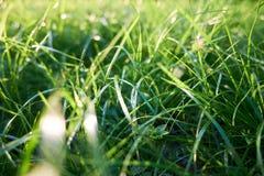 Zielonej trawy tła zielonej trawy zbliżenie Zdjęcie Stock