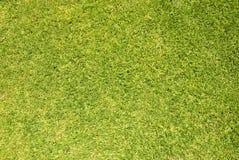 Zielonej trawy tło zdjęcie stock