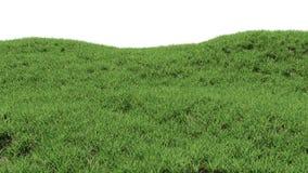 Zielonej trawy tło Górkowaty krajobraz zakrywający z trawą ilustracja wektor