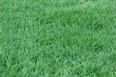 Zielonej trawy tło - 1 2017 WRZESIEŃ Obraz Royalty Free