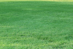 Zielonej trawy tło - 1 2017 WRZESIEŃ Zdjęcia Stock