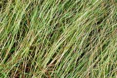 Zielonej trawy tła Fotografia Royalty Free