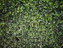 Zielonej trawy tło obraz stock