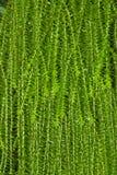 Zielonej trawy tło Zdjęcie Royalty Free