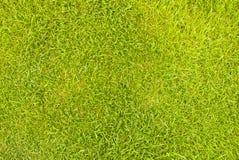 Zielonej trawy tło Obrazy Royalty Free