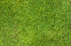 Zielonej trawy tło Zdjęcia Stock