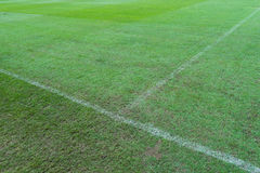 Zielonej trawy tło Obraz Royalty Free