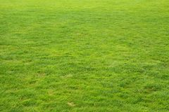 Zielonej trawy tło Fotografia Royalty Free