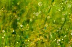 Zielonej trawy tło Zdjęcia Royalty Free