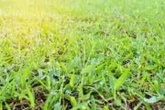 Zielonej trawy tło Fotografia Stock