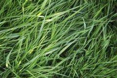 Zielonej trawy tło Obrazy Stock