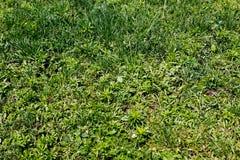 Zielonej trawy tło Odgórny widok Obrazy Royalty Free