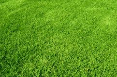 Zielonej trawy tekstura zdjęcia royalty free