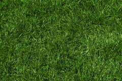 Zielonej trawy tekstura Fotografia Royalty Free