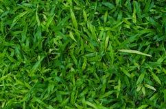 Zielonej trawy tekstura jako tło Obrazy Royalty Free