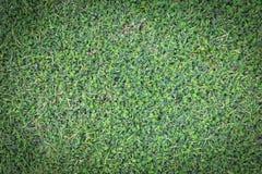 Zielonej trawy tekstura lub zielonej trawy tło Obrazy Royalty Free