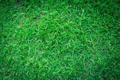 Zielonej trawy tekstura lub zielonej trawy tło Obrazy Stock