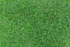 Zielonej trawy tekstura lub zielonej trawy tło Zdjęcia Royalty Free