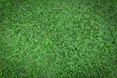 Zielonej trawy tekstura lub zielonej trawy tło Zdjęcia Stock
