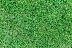 Zielonej trawy tekstura lub zielonej trawy tło Obraz Stock