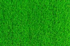 Zielonej trawy tekstury tła eco pojęcie Zdjęcia Stock