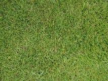 Zielonej trawy tekstury tło z przerwami, textured tło tapeta zdjęcie stock