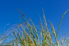 Zielonej trawy trzony Zdjęcie Royalty Free