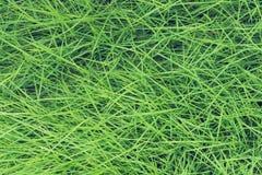 Zielonej trawy wzór, abstrakcjonistyczny tekstury tło świeża natura Fotografia Stock