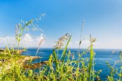Zielonej trawy zakończenie up na Atlantyk wybrzeżu Obrazy Stock