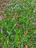 Zielonej trawy zmielona tekstura zdjęcia stock