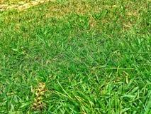 Zielonej trawy zmielona tekstura obraz royalty free
