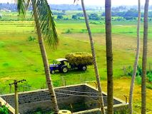 zielonej ziemi Zdjęcie Royalty Free