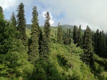 zielonej ziemi zdjęcie stock