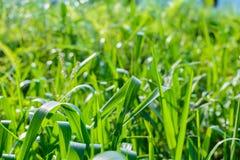 Zielony łąki linii wzór i tło Fotografia Stock