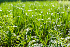 Zielony łąki linii wzór i tło Zdjęcia Stock