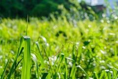 Zielony łąki linii wzór i tło Zdjęcia Royalty Free