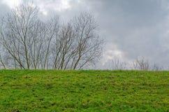 Zielony łąkowy i przeciw dramatycznemu chmurnemu niebu gałąź Zdjęcia Stock
